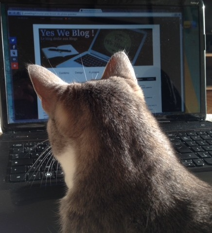 bloggingcat