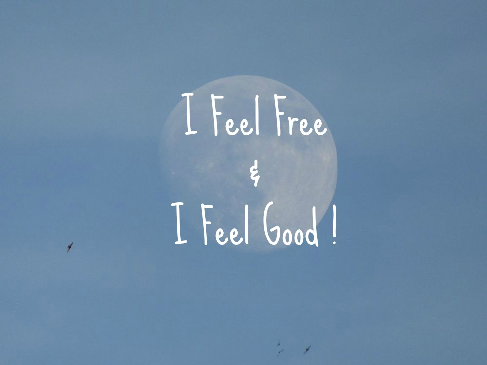 moon-and-birds-i-feel-free