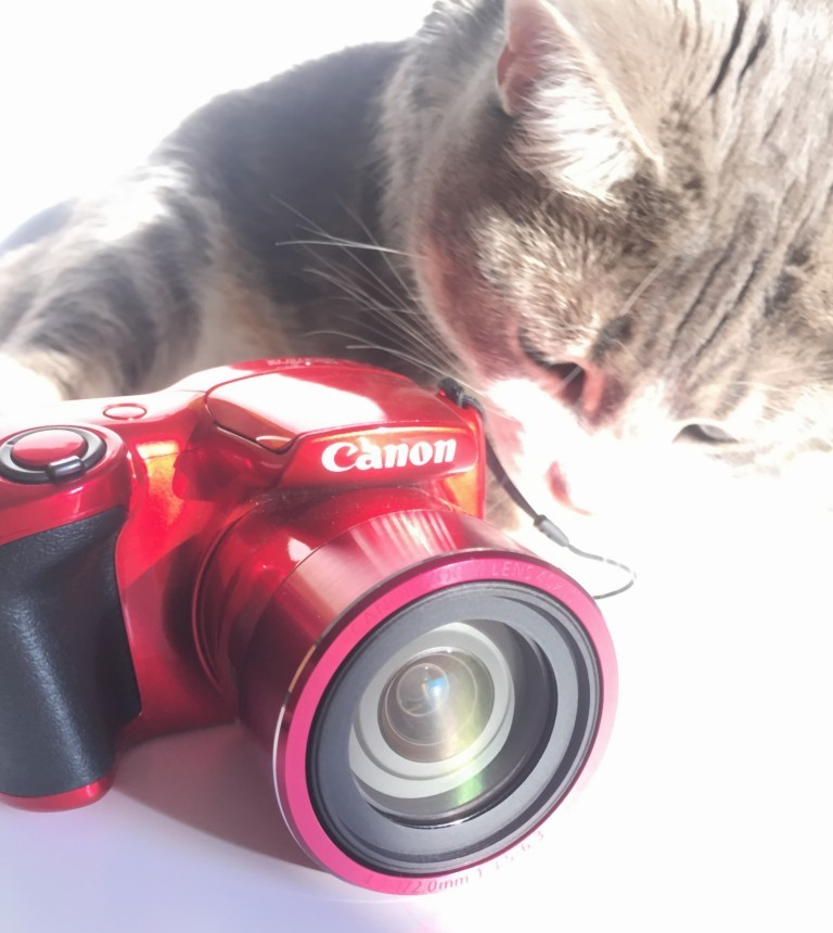 cat-photo-camera
