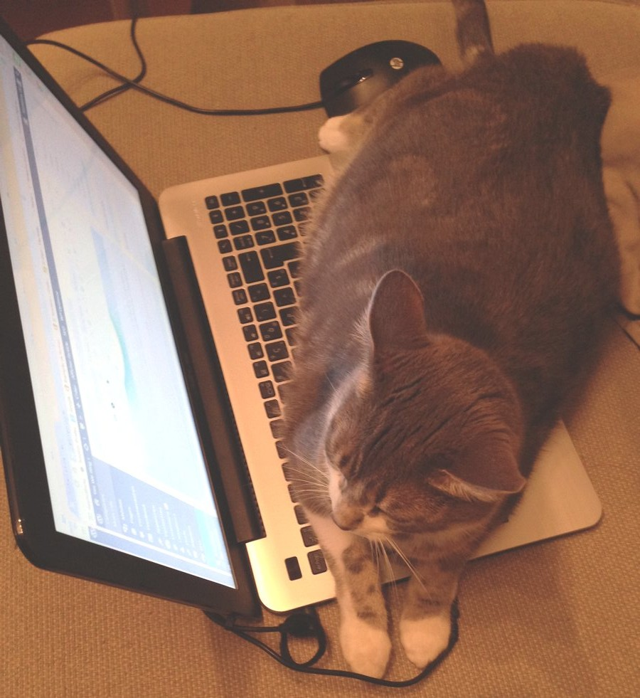 cat-laptop-straw