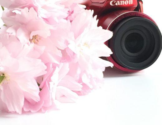 sakura-and-camera