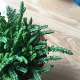 fresh-succulent-1024x1015
