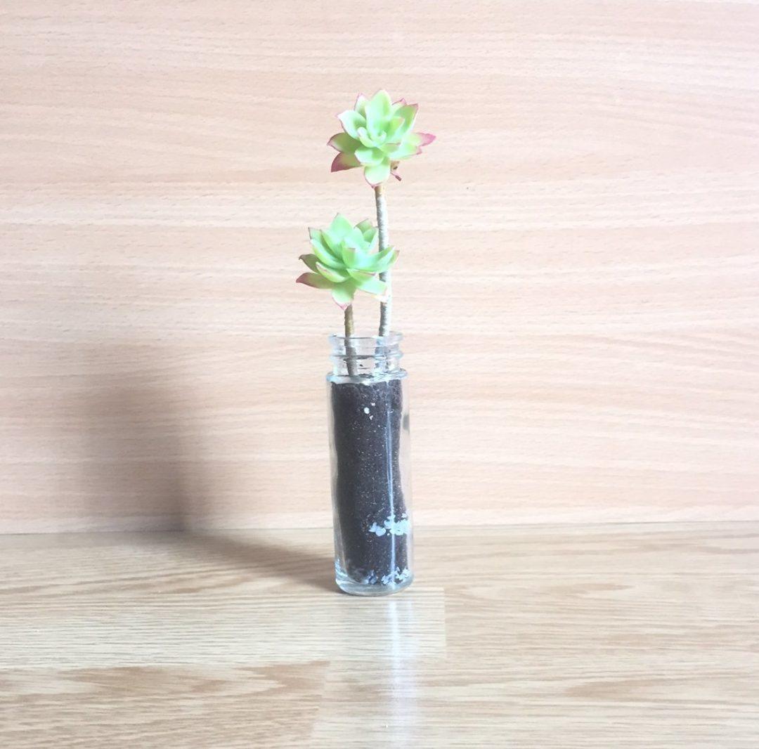 succulente-bouture-terre