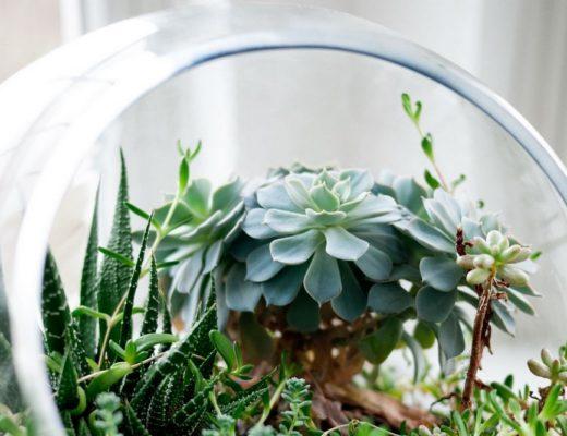Terrarium succulentes Succulentissime