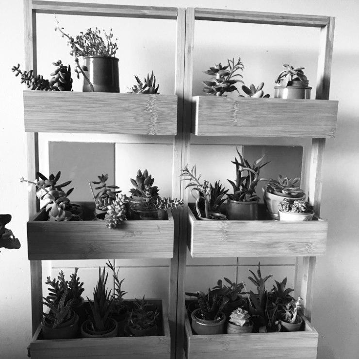 Meubles Plantes