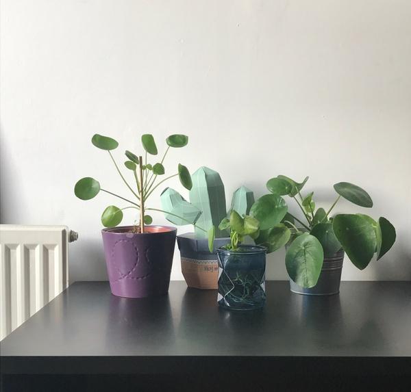 Pilea et cactus papier