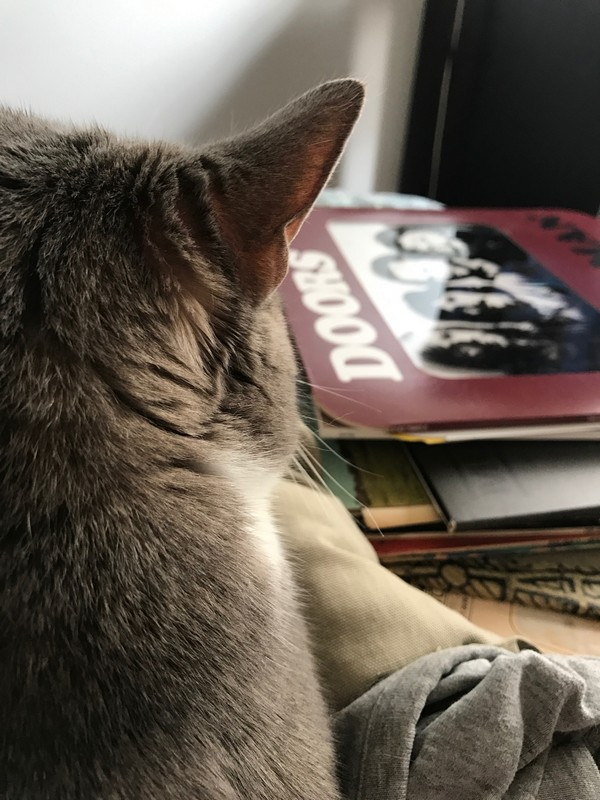 Vinyl records and cat