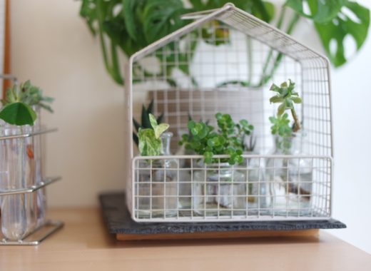 Transparence pour Boutures plantes