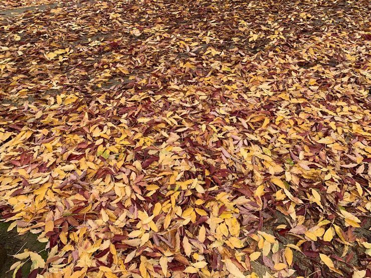 couleurs d automne milliers de feuilles au sol un vrai tapis