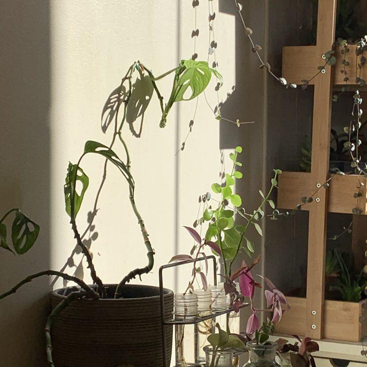 futur petit mur végétal dans notre cuisine