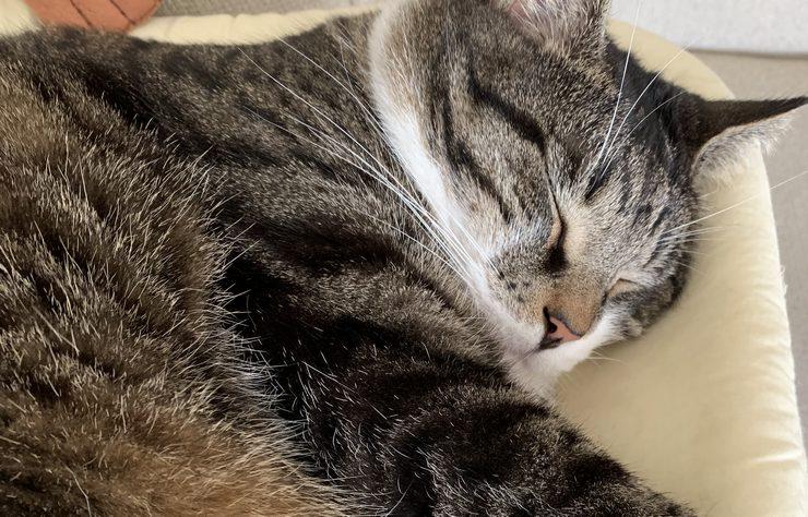 repos du guerrier pour notre felin lucky qui fait une bonne sieste