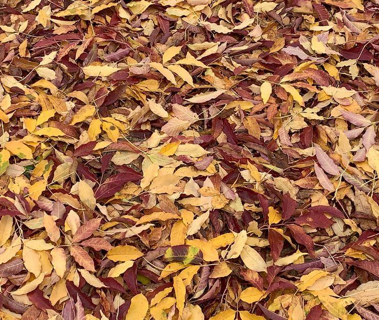 tapis de feuilles d automne au sol
