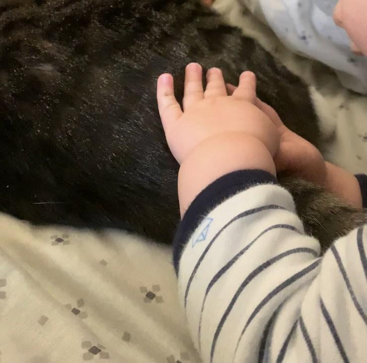 quand notre bébé câline notre chat Lucky
