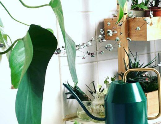 arrosoir metallique ikea vert jungle cuisine