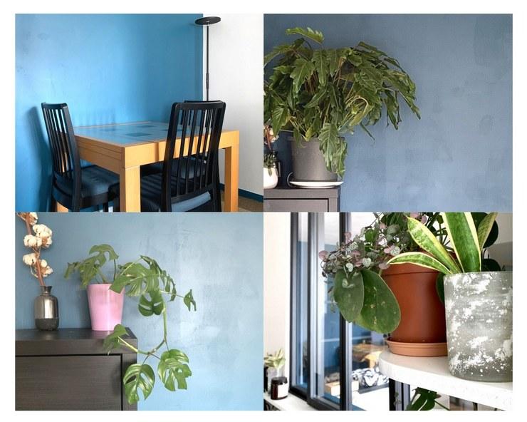 bleu paon dans le salon
