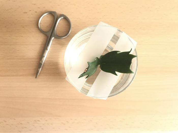 Astuce Scotch pour tenir bouture de Cactus de Noel