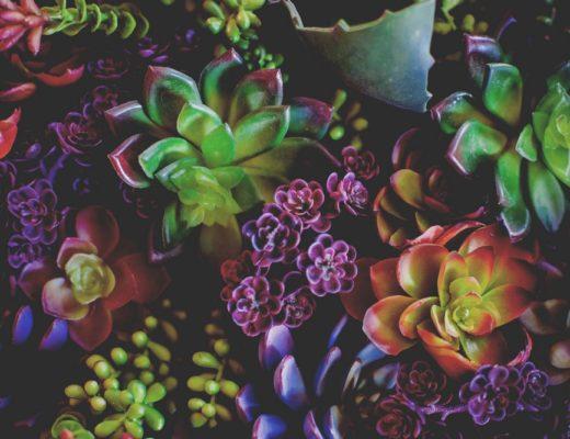 Bonnes raisons d avoir des plantes grasses et succulentes