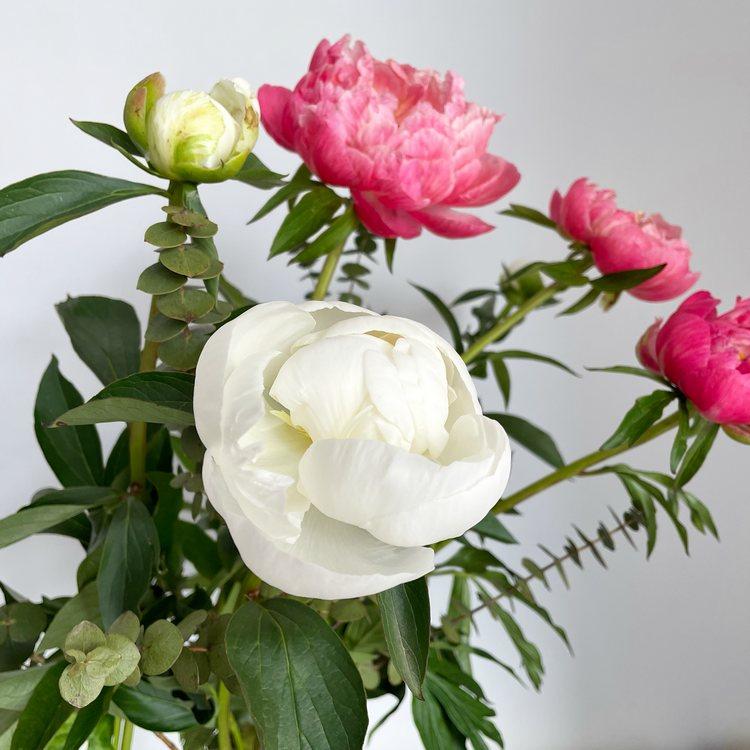 pivoines roses japonaises et pivoines blanches