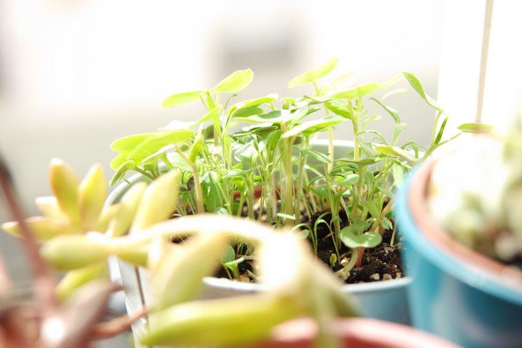pousses de fleurs des champs graines la fabrique à sachets