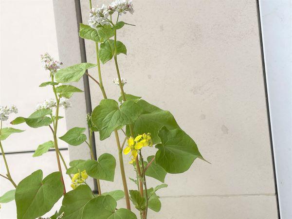Fleurs des champs de la fabrique à sachets !